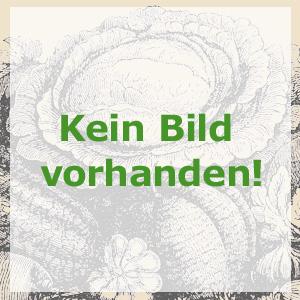 Knoblauchrauke, Bio