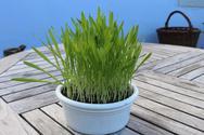 Smoothie-Gras, Bio