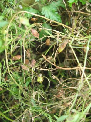 Vert du Puy, Bio