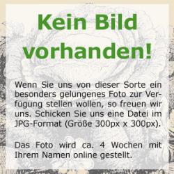 Münchner Bier, Bio