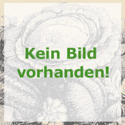 Bärlauch, Bio