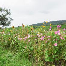 Bauerngarten-Mix, Bio