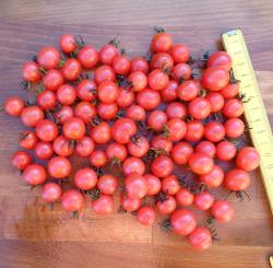 Rosa-Rote Cherry, Bio