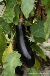 Sehr Frühe von Barbentane, Bio
